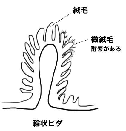 http://nursereport.net/illust/hida.jpg