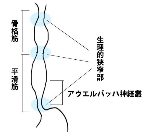 http://nursereport.net/illust/shokudou.jpg